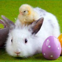 Szórakoztató HÚSVÉT Siófokon – Húsvéti Wellness Hétvége